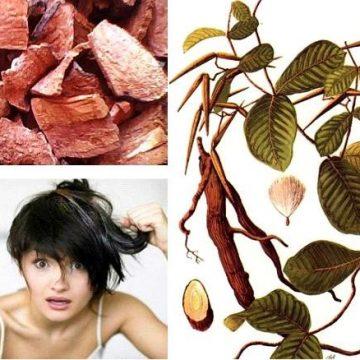 Lá hà thủ ô có tác dụng thế nào trong làm đẹp da và tóc