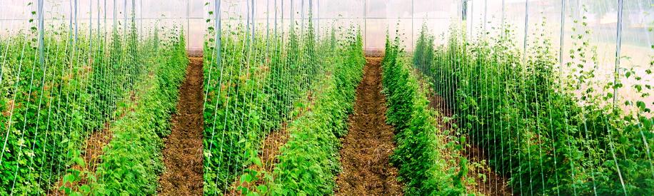 Tuệ Linh và những vùng trồng dược liệu sạch chuẩn hóa 1